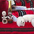 signature Macedonian couple and sheep