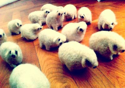 Sheep hana